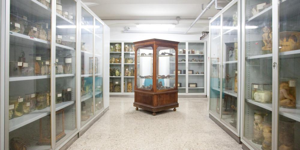 il museo della cacca