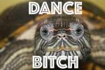 L'orgasmo remixato di simpatiche tartarughe