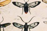 """L'arte di collezionare mosche"" di Frederik Sjöberg"